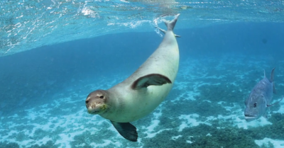 Much loved seal killed in a marine protected area in Greece, causing an uproar