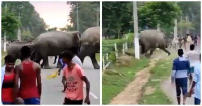 Man trampled to death after a crowd provokes a herd of elephants